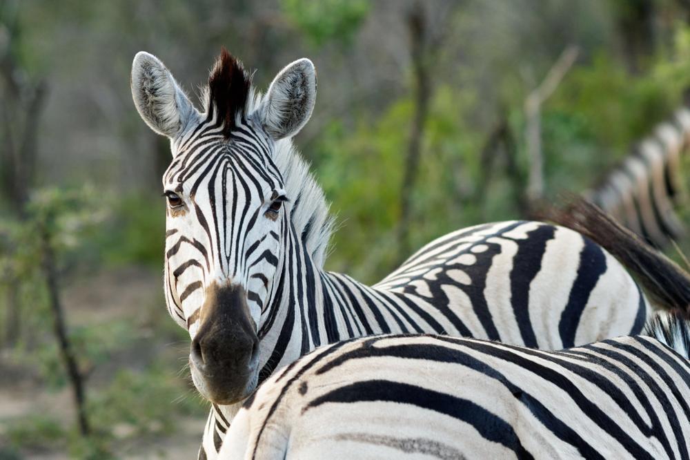 Tierbilder, Wandbilder und Fine Art Bilder Südafrika