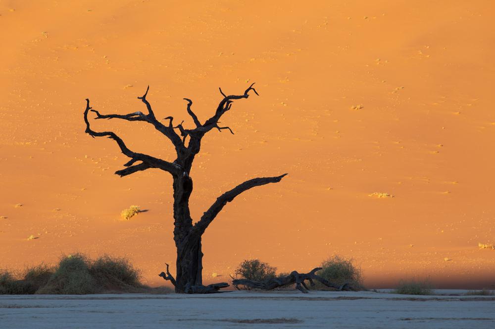 Düne, Dune, Namibia, Namib, Tree, Sossusvlei, Fotografie, Naturfotografie, Landschaftsfotografie, Landschaft, Wandbild, Bild bestellen, Wandbild bestellen, Fine Art