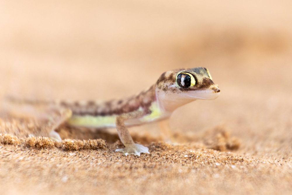 Tierbilder, Wandbilder und Fine Art Bilder Namibia