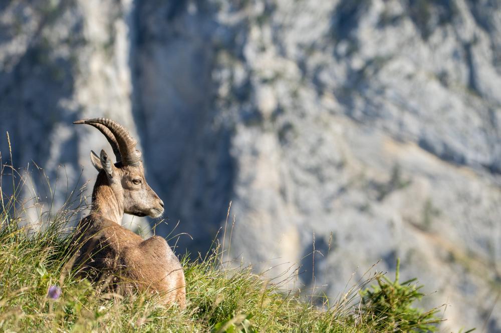 Tierbilder, Wandbilder und Fine Art Bilder Schweiz
