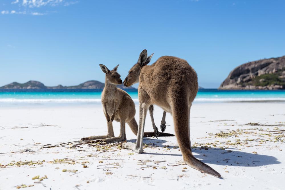 Tierbilder, Wandbilder und Fine Art Bilder Australien