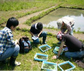 水生生物モニタリング(年4回)