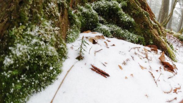 熊伏山と4月の雪