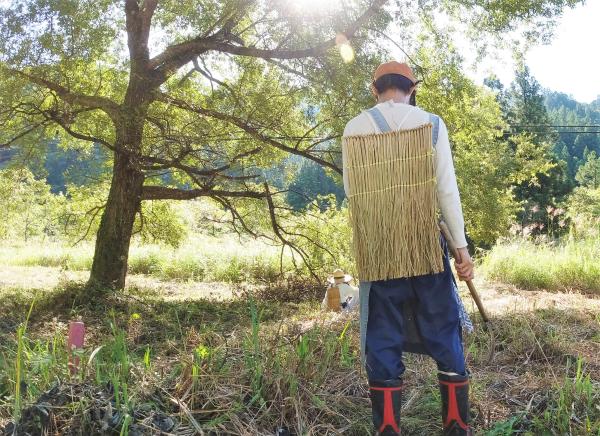 茅刈りと茶畑