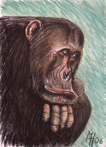 Schimpanse, Pastelkreide auf Papier