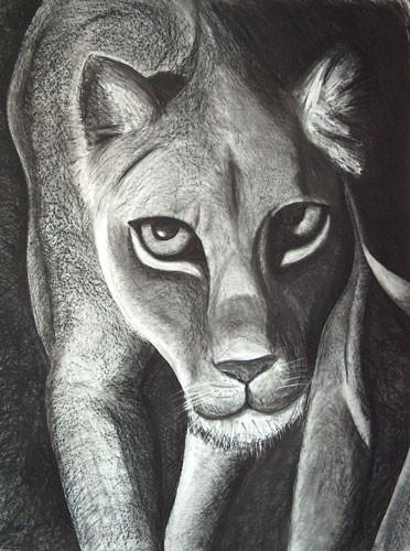 Löwin, Kohle auf Papier