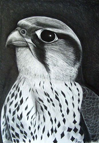 Falke, Kohle auf Papier