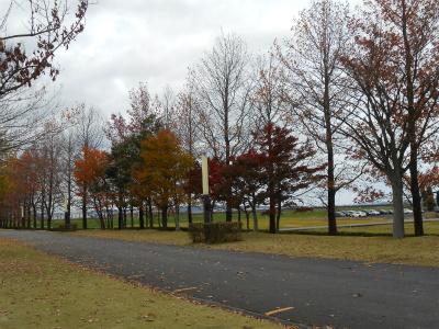 紅葉も見ごろでした。