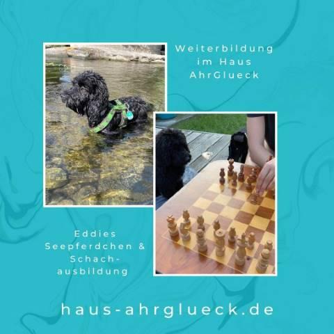 Hunde Eddie lernt schwimmen in der Ahr
