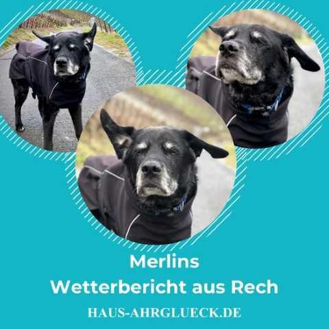 Der Wetterbericht aus dem Ahrtal von Hund Merlin