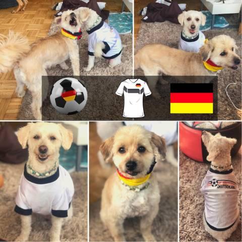 AhrGlück Hunde Rudel unterstützt Deutschland