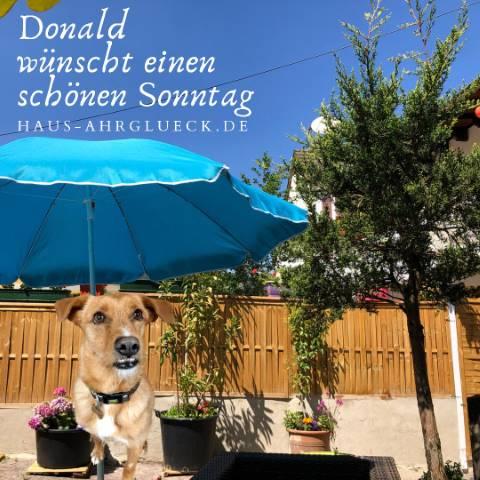 Gasthund Donald