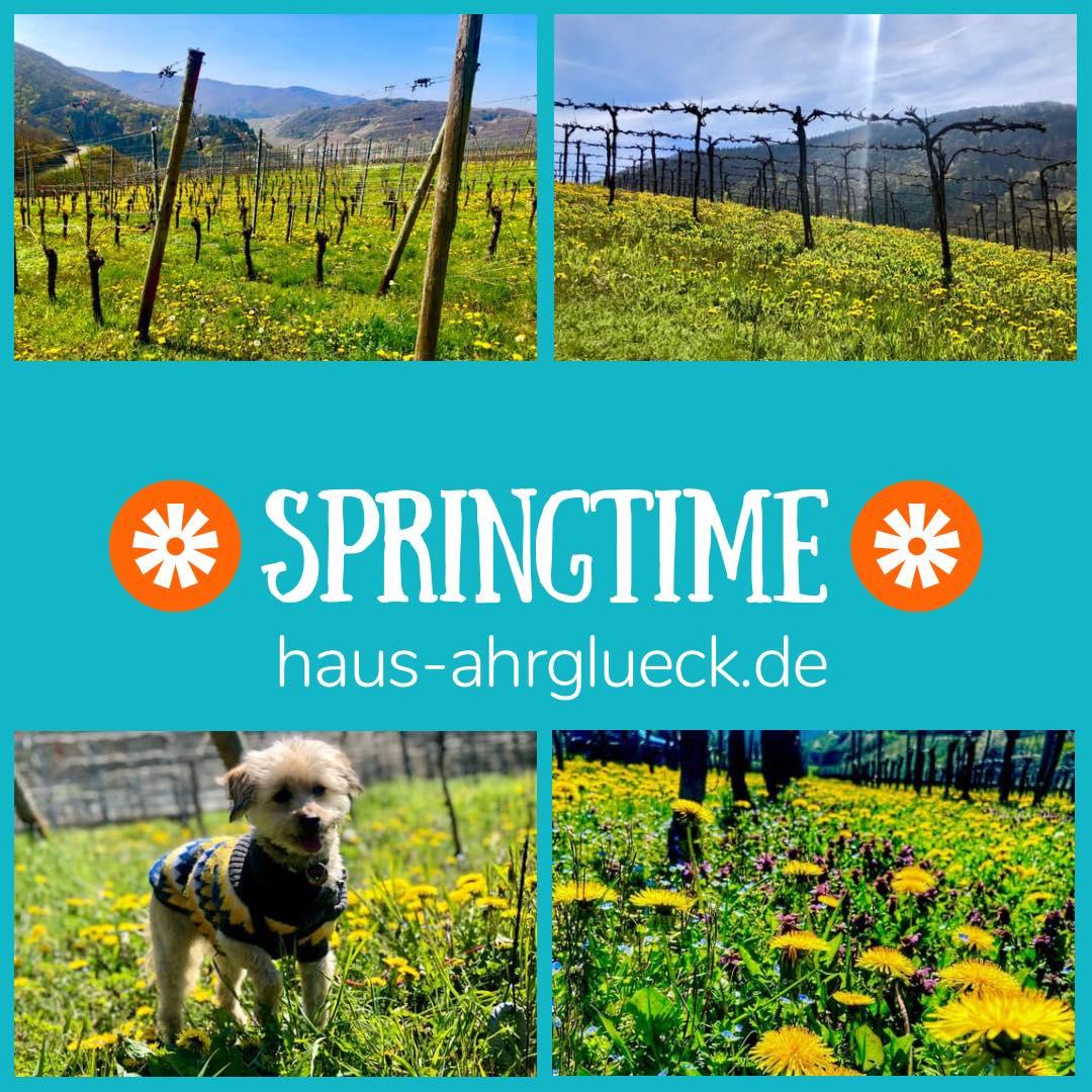 Frühling im Ahrtal