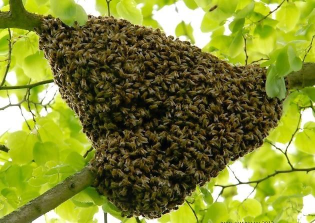 trouver et installer un essaim - la ruche horizontale