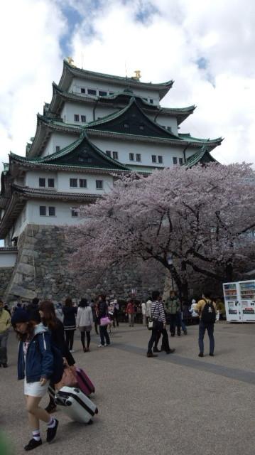 天守に聳える金シャチの名古屋城へ