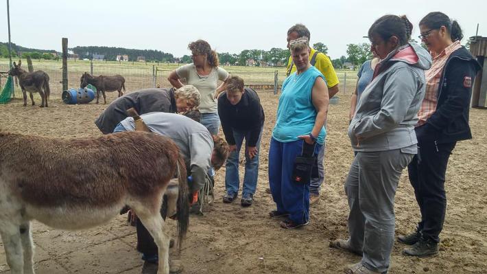 Esel-Workshop | Eselhufe bearbeiten mit Hufschmiedin Daniela Laude