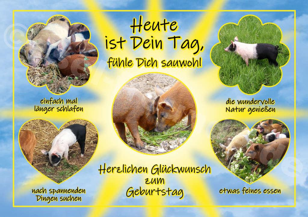 Eselpostkarte - Dein Tag - mit Schweinen