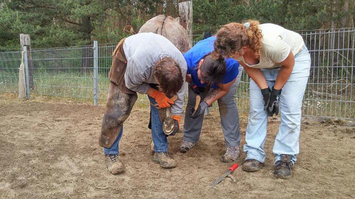 Esel-Workshop | Hufbearbeitung mit Hufschmiedin Daniela Laude