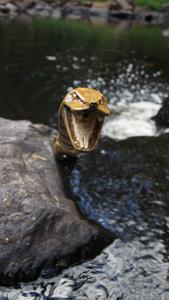 Wanderstab in Schlangenform im Wasser