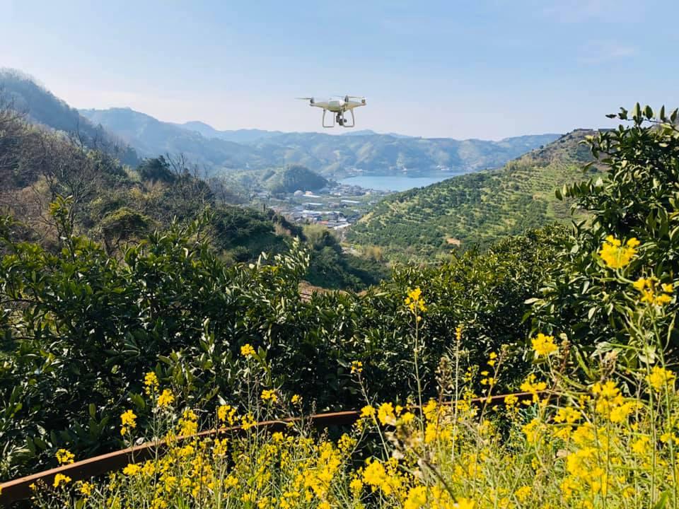 DJIファントム菜の花の咲く上空を飛行する