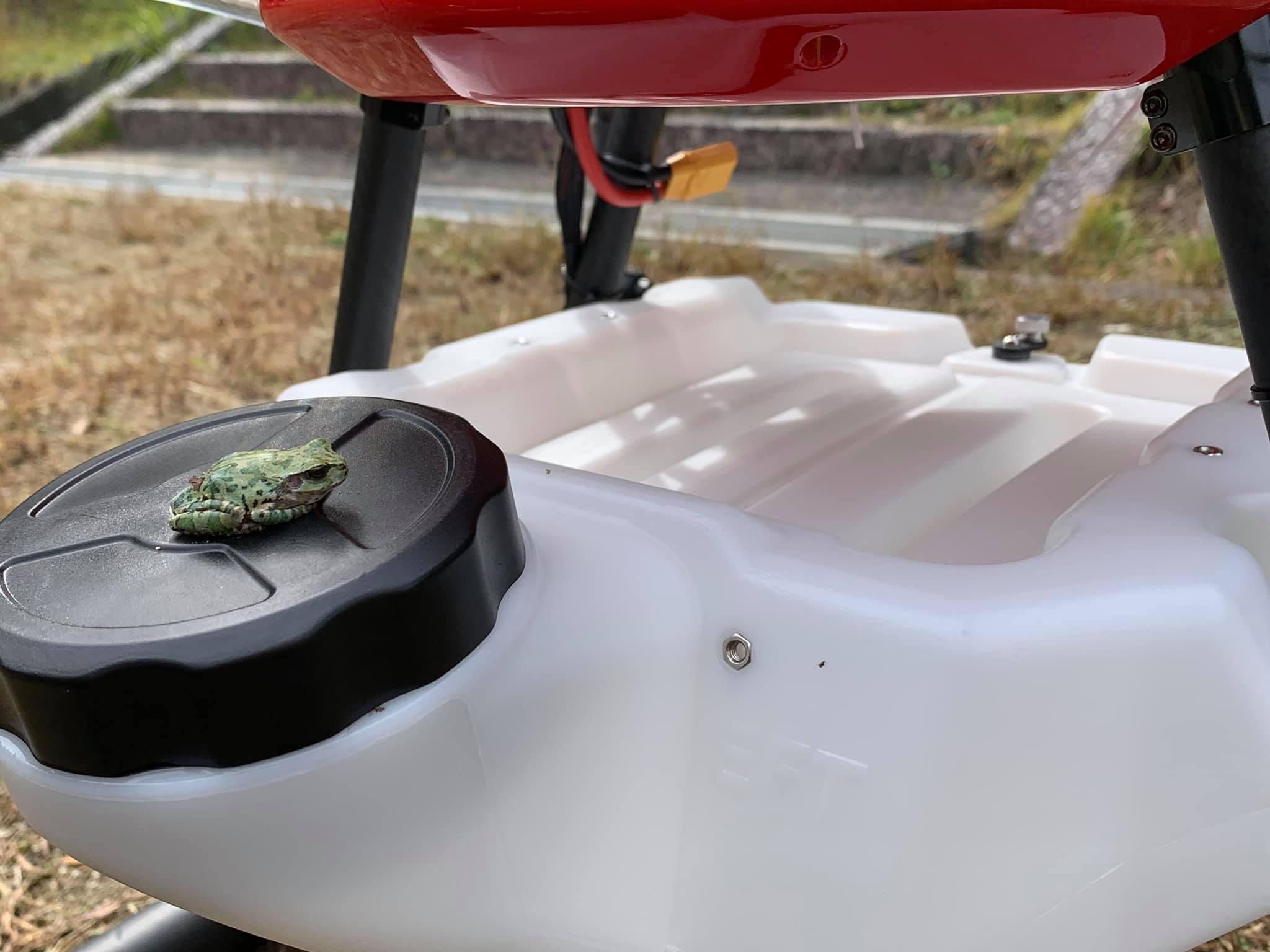 散布ドローン離陸直前に搭乗したカエル。初めて空を飛んだ
