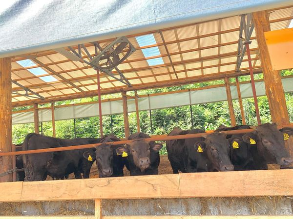 夏野菜カレーでパワー全開🔥午後もドローン空撮続きます!
