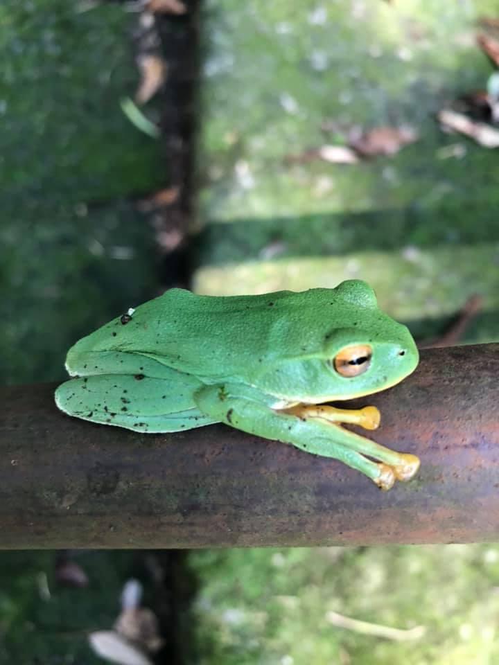 ハニービーワークス!ドローンロケ隊美し色の蛙と出逢う!