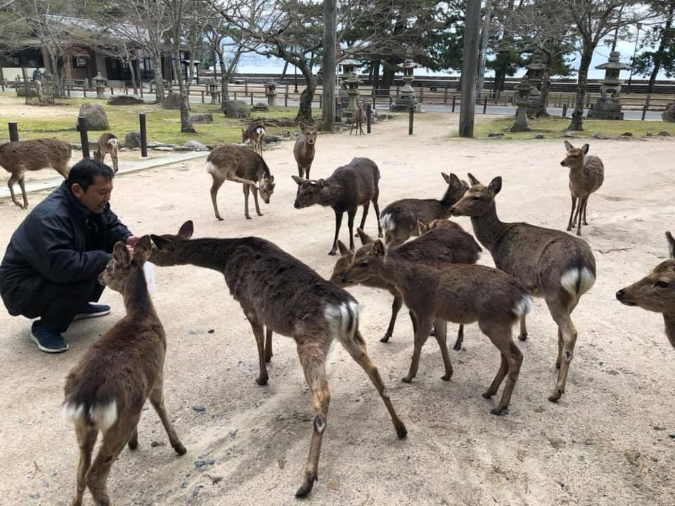 広島宮島のたくさんのマイフレンズ