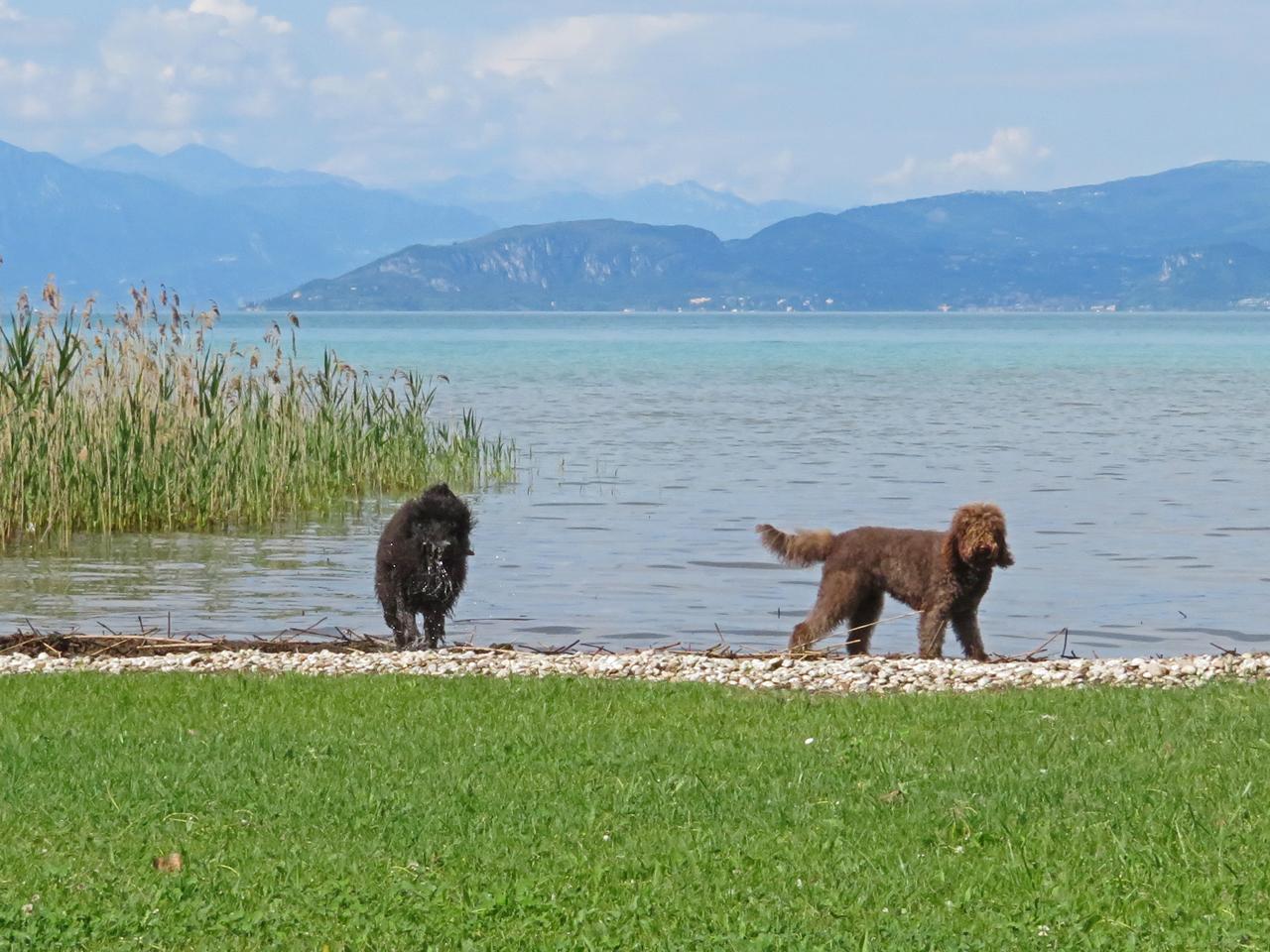 Privatstrand am Gardasee, ein Paradies für Wasserhunde