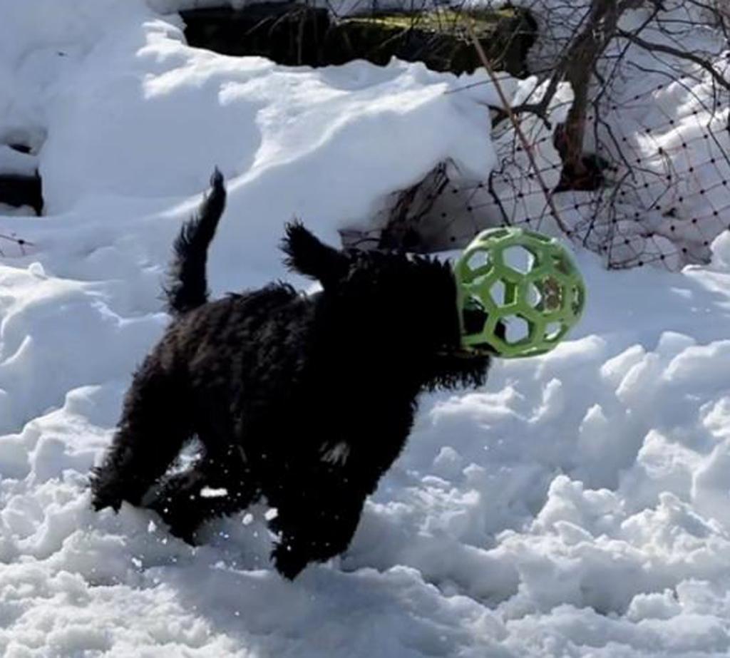 Catherin-Cailou mit voller Kraft durch den Schnee