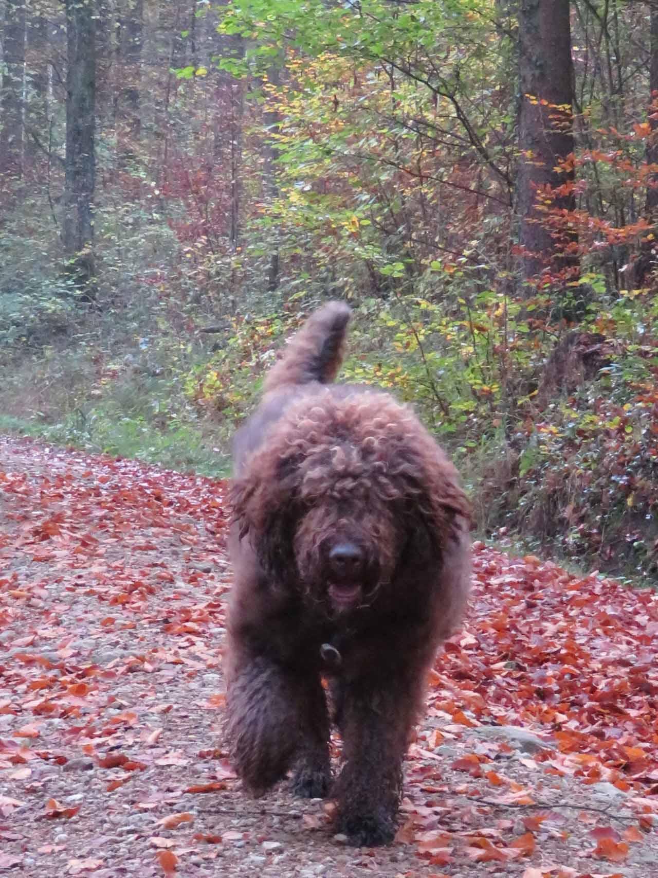 Glori geniesst den herbstlichen Wald
