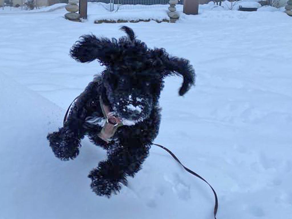 Flying Dog Cleopatra............