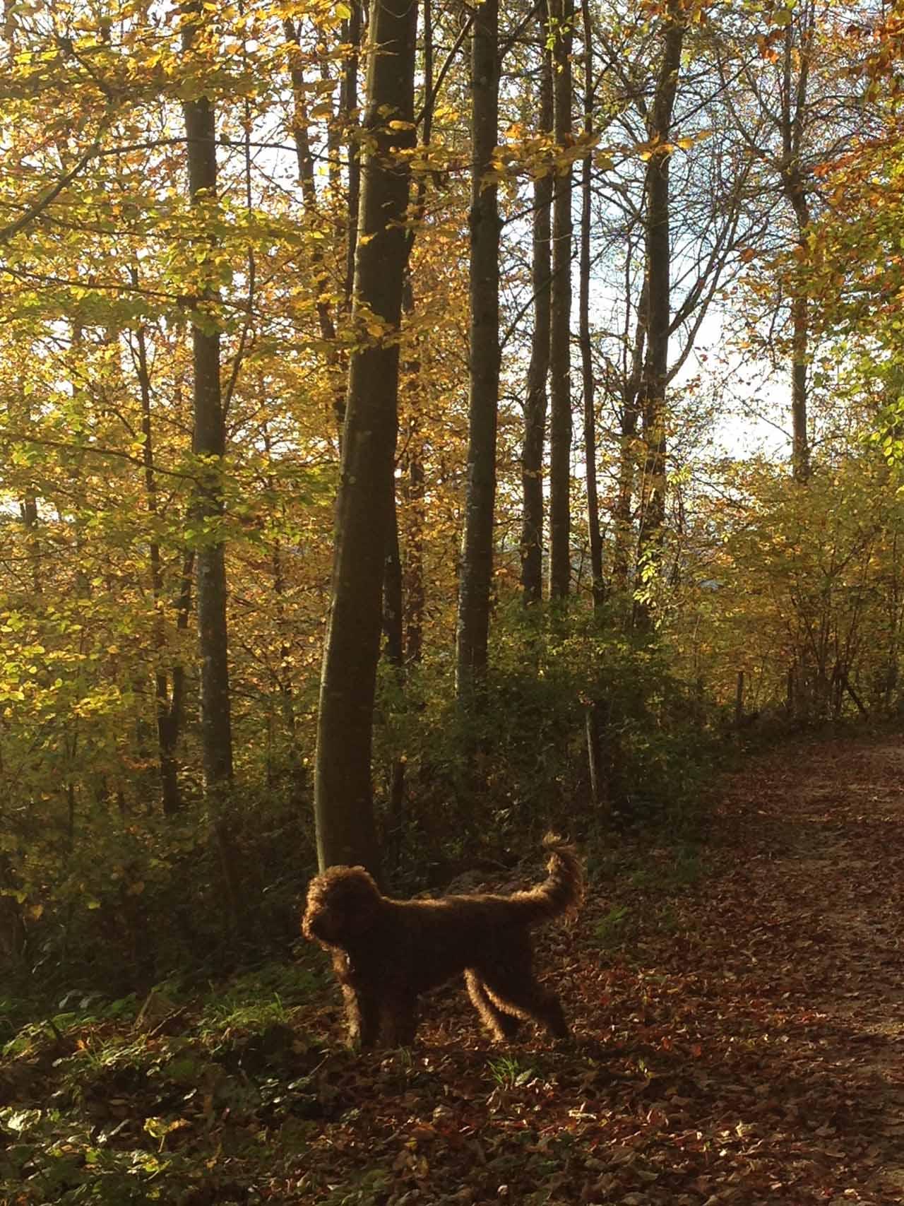 Herbstlicher Spaziergang zum Naturkundehaus in Aarau