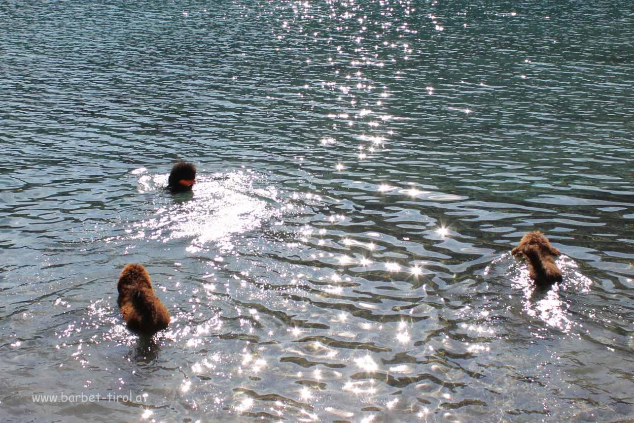 Glori, Héloise und Alex geniessen das Bad im Bergsee