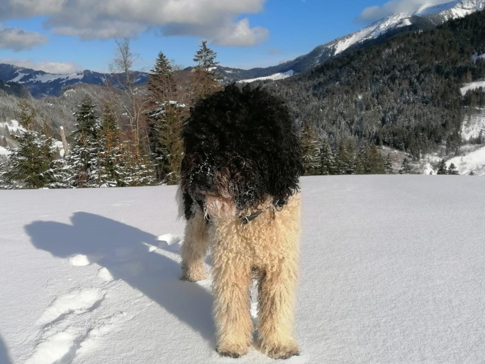 Bruce-Oscar, auch er ist standesgemäß viel am Berg unterwegs und schneesicher