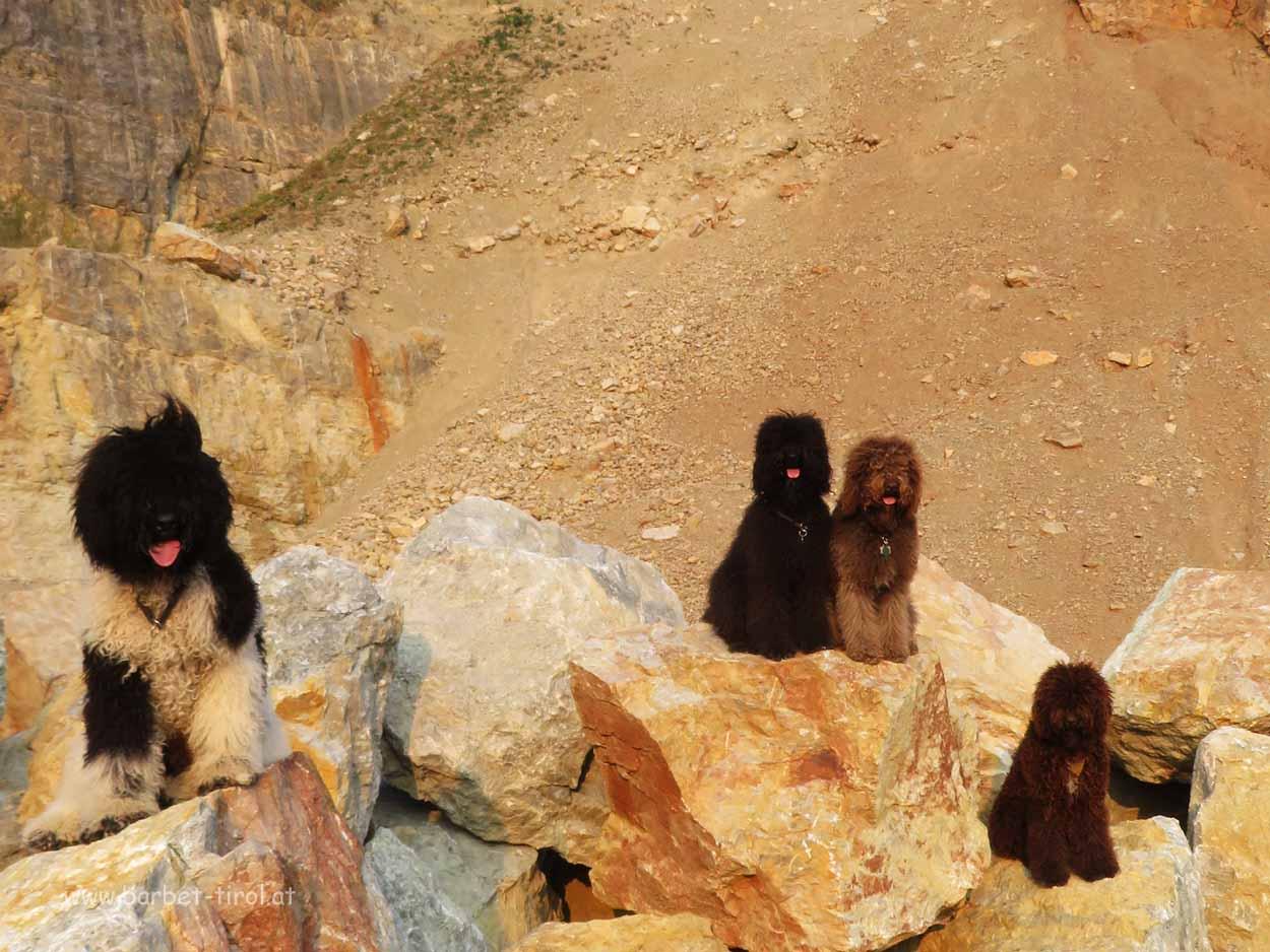 """Vier Barbets """"von den Tiroleralpen"""" unterwegs in den Kitzbüheler Alpen"""