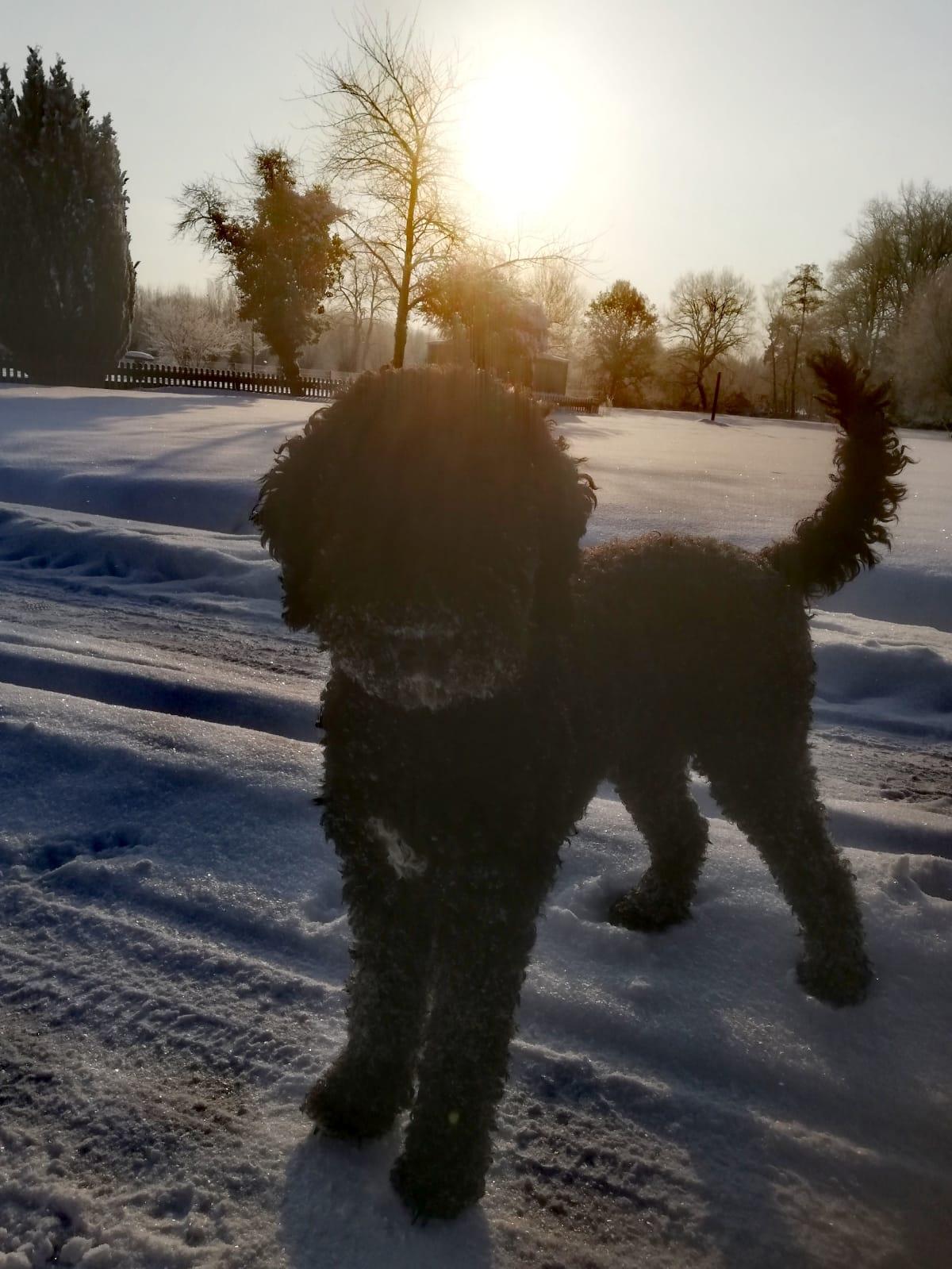 Betty erlebt ihren ersten Schnee in NRW