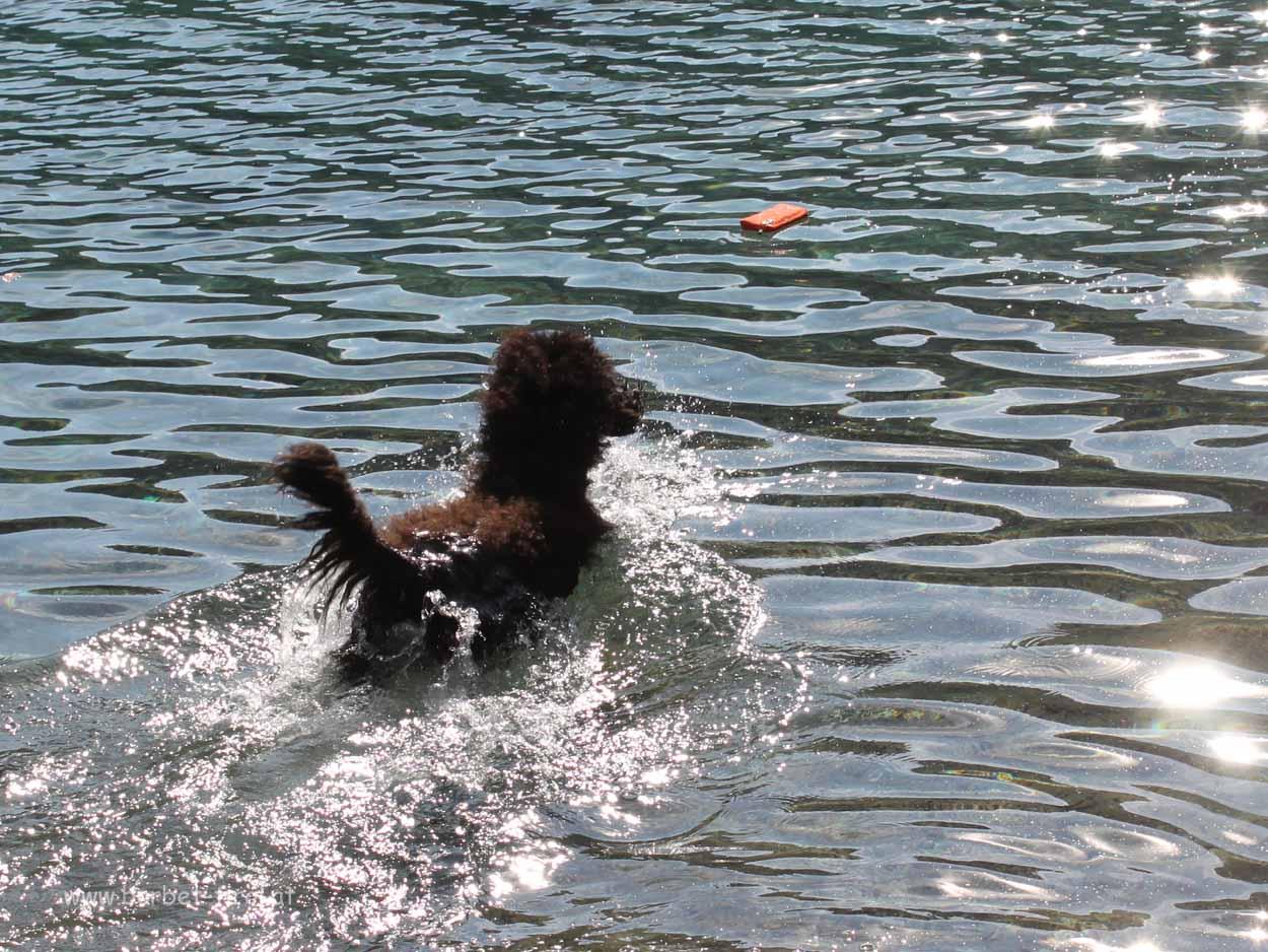 Héloise liebt das Wasser. Apportieren gehört für sie dazu :-)