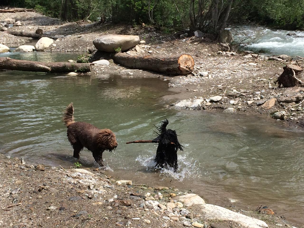 Wasserhunde brauchen Wasser..........
