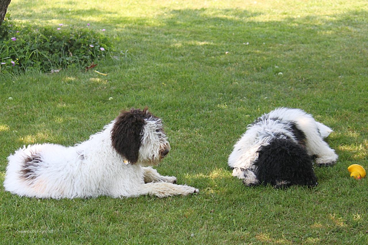 Alpha und Armstrong nutzen das schattige Plätzchen für eine kurze Ruhepause