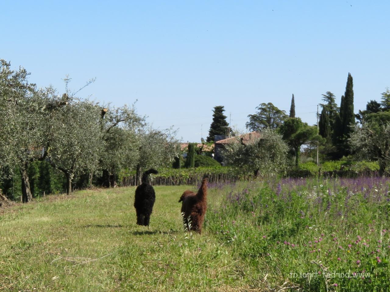 Zwischen Wein- und Olivenhainen