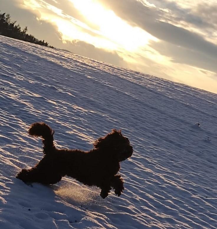Bradley-Prion, ihm ist keine Locke zu schade....Vollgas ins Schneevergnügen