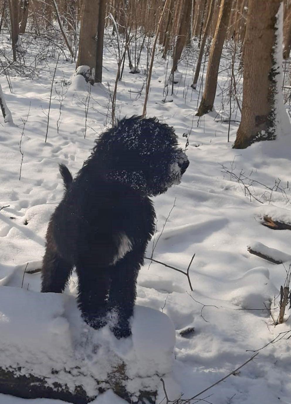 Captain-Filou findet den frisch verschneiten Wald ganz aufregend
