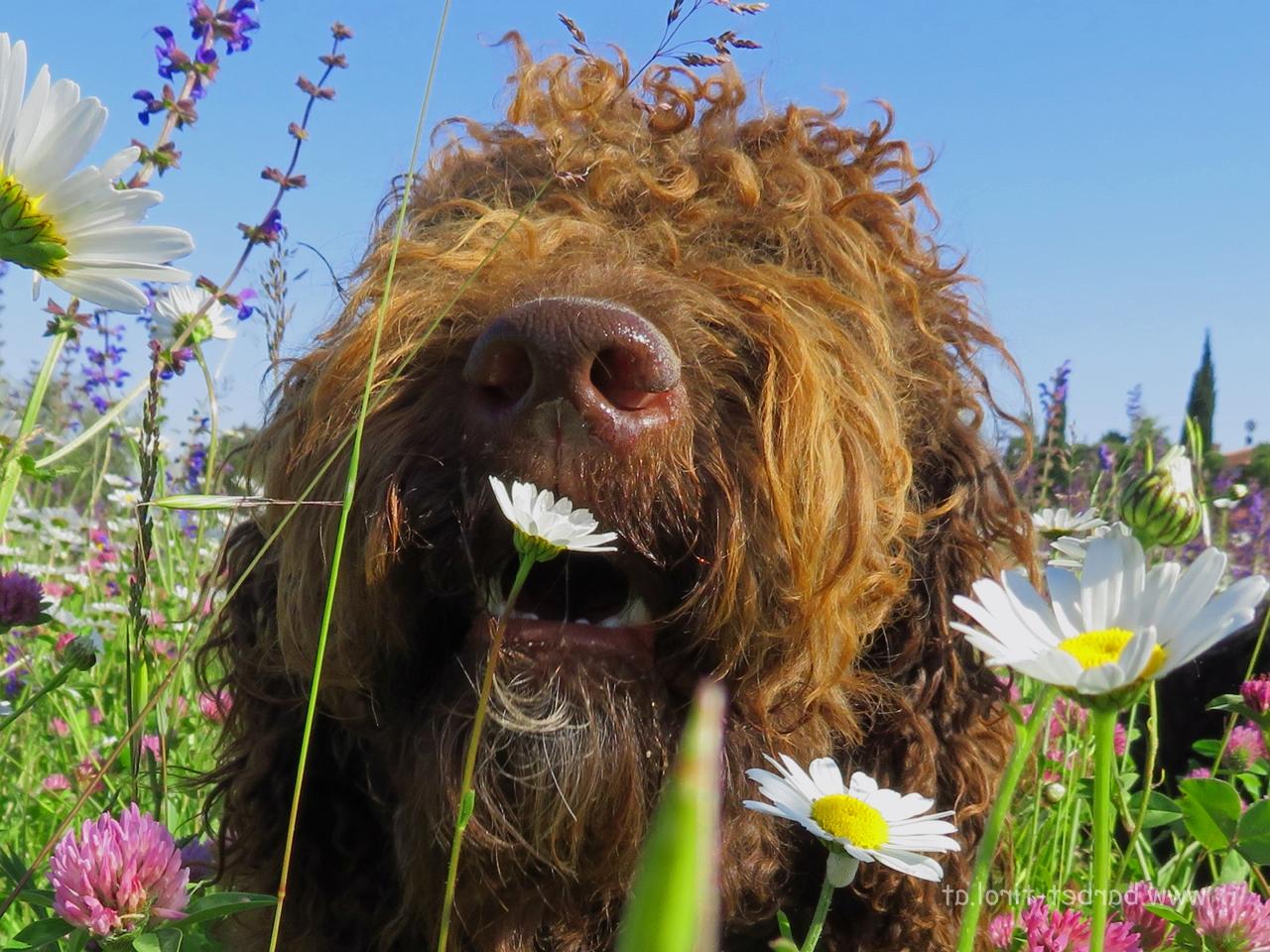Frühlingsdurft hmmmmmmmmmm ist das gut :-)