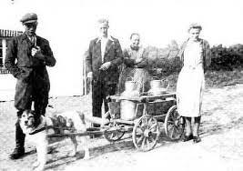 """Aus unserer Geschichte (Mitte des 19. Jahrhunderts): Ein """"Karrenhund"""" zieht Milchkannen zur Käserei!"""