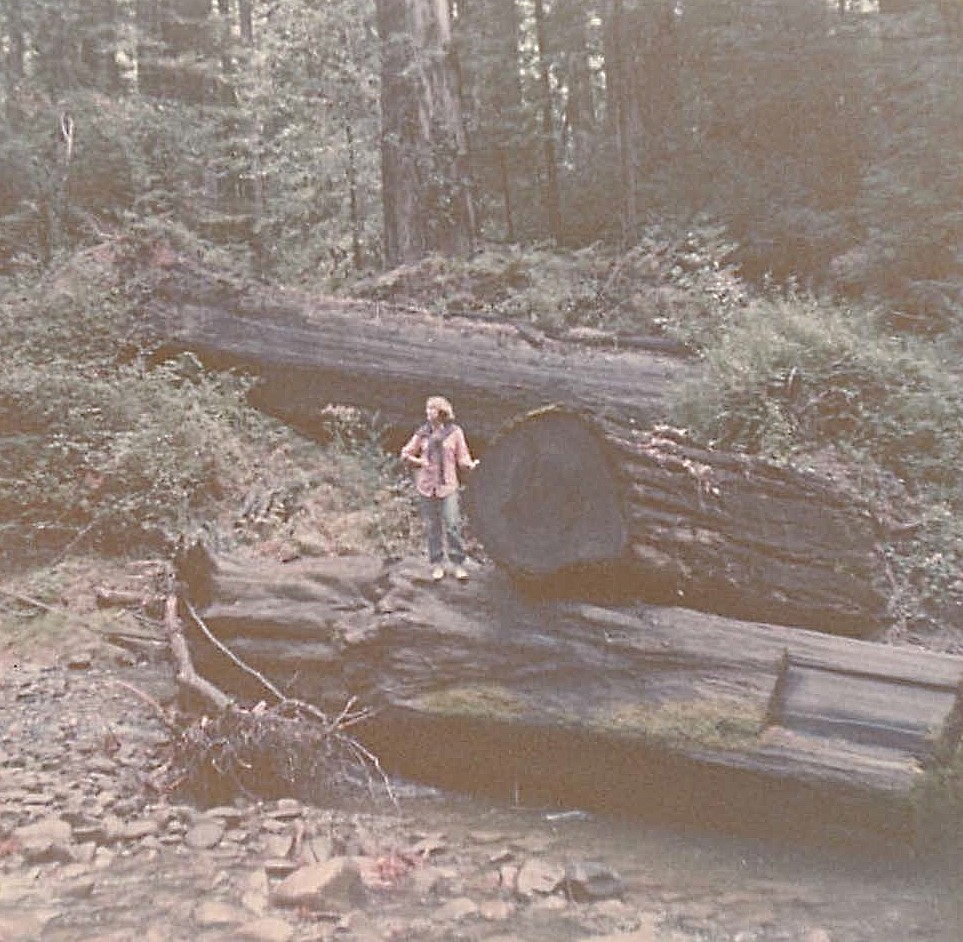 Lorraine among the huge trees near the Rogue River, 1978