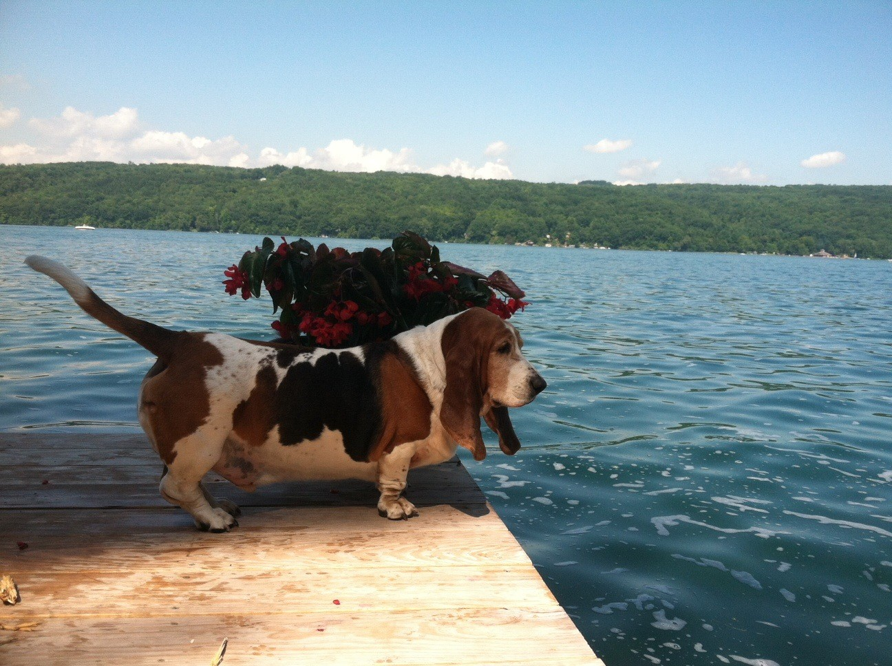 Oliver, July 2015 Skaneateles Lake