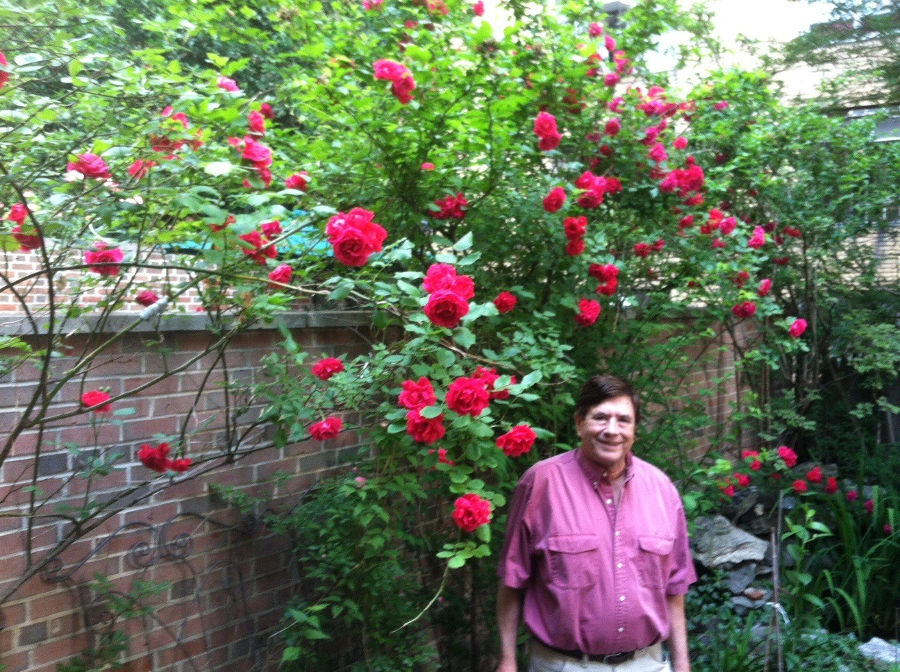 John's lovely red roses in our backyard! 6-14