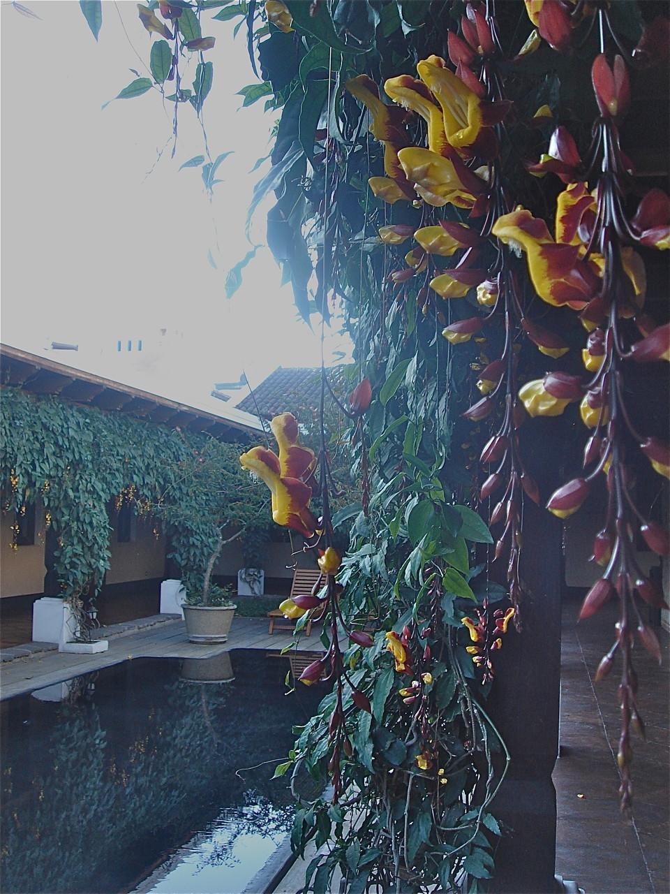 our hotel, Porta Antiqua