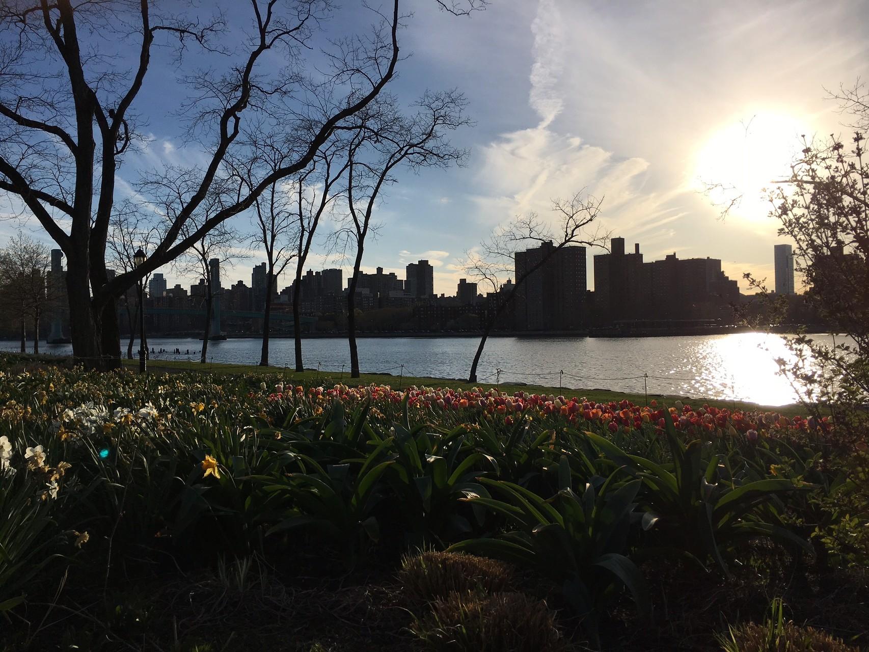 Ward's Island, April 19, 2016